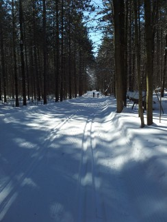 long road of winter