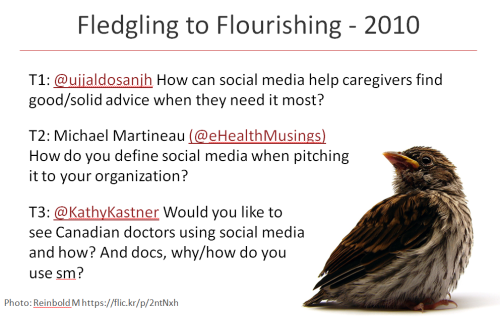 Fledgling to flourishing